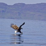 A boat trip from the Isle of mull